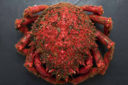 galician crab from the estuary, wild fresh seafood Imagens