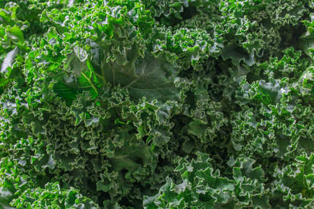 abstract background of fresh vegetable leaves