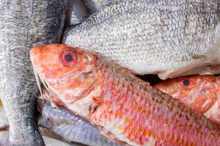 top view of varied fresh fish