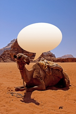 Camels in the desert of Wadi Rum in southern Jordan photo