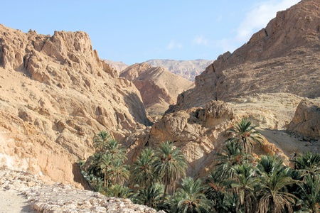 Canyon and the desert oasis of Tozeur