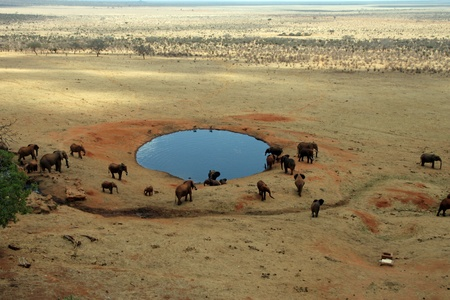 Savannah elephants gathered in a lake to drink, Tsavo East, Kenya Stock Photo