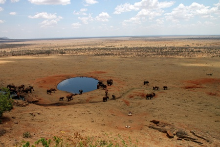 Savannah elephants gathered in a lake to drink, Tsavo East, Kenya photo