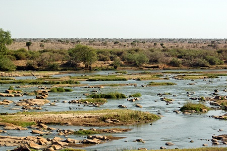Tsavo River, Park Tsavo East in Kenia photo