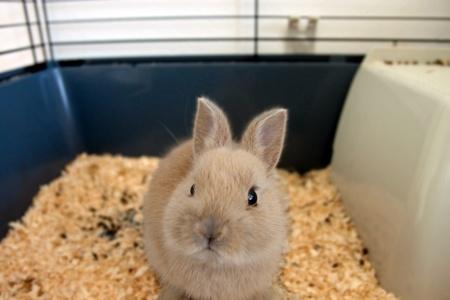 rabbit cage: Coniglio nano bambino in una gabbia di colore beige