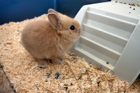 rabbit cage: Dwarf baby rabbit in a cage in beige color