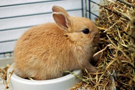 rabbit cage: Nano coniglio in una gabbia di fieno mangiare Archivio Fotografico