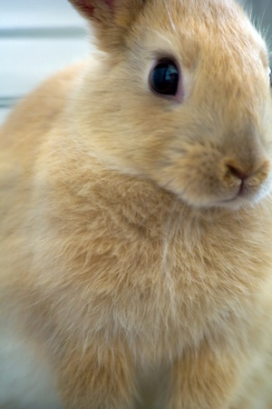 nether: portrait of a young dwarf rabbit in a cage