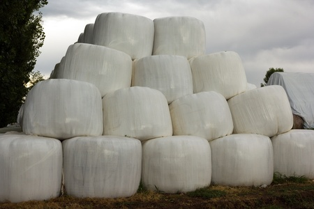 balls of hay covered photo