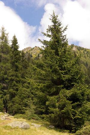 Parco Naturale Adamello, Dolomiti, Italia