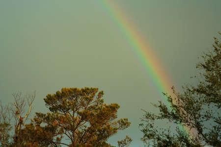 bayou rainbow Banco de Imagens