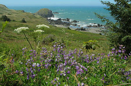 wildflowers, Oregon coast trail 版權商用圖片