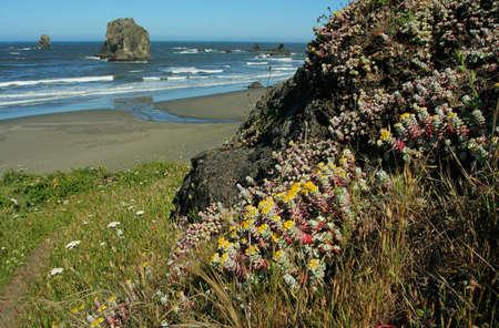 coast wildflowers