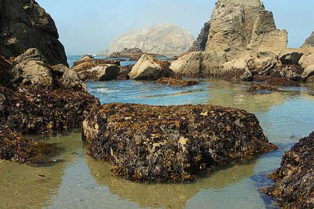 オレゴン州干潮時の岩