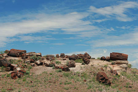 Petrified Forest, Arizona photo