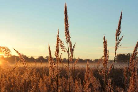 Big Bluestem prairie grass, Homestead National Monument of America, Beatrice, Nebraska