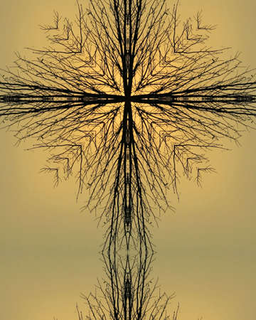 kaleidoscope cross4:  tree silhouette, Nebraska morning photo
