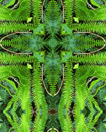 kaleidoscope cross:  ferns in redwood forest, California