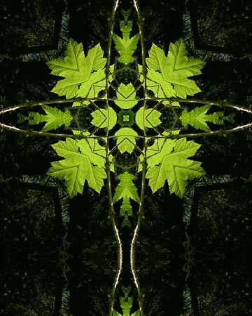 kaleidoscope cross:  backlit green leaves Reklamní fotografie