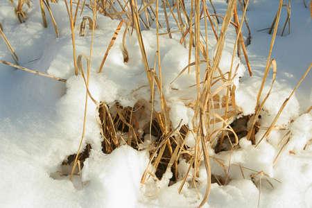 snow on tall prairie grass; Homestead National Monument of America, Beatrice, Nebraska Imagens