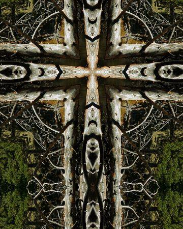kaleidoscope cross: dead tree 2, Sprague Lake