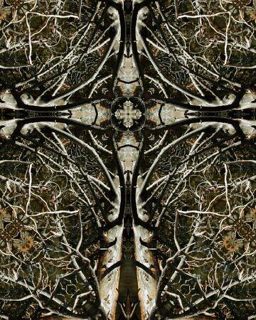 kaleidoscope cross:  dead tree, Sprague Lake