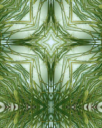 kaleidoscope cross:  ice layer on pine needles