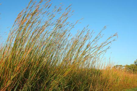 Big Bluestem hoog gras prairie; Homestead Nationaal Monument van Amerika, Beatrice, Nebraska