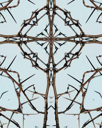 クロス万華鏡: とげがあるハリエンジュの木のとげ
