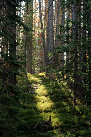 ray of morning light shining on forest floor, Colorado