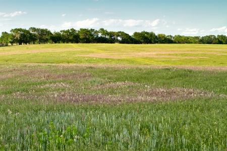 Kansas pasture, plants and grasses Banco de Imagens