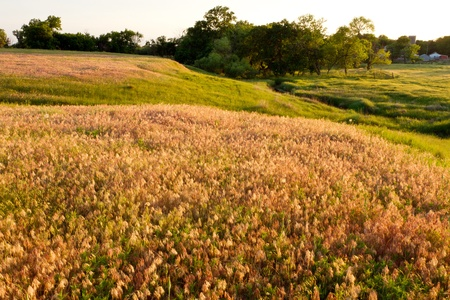 colorful grasses in Kansas pasture
