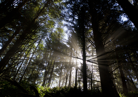 morning sun rays shining through trees, Oregon forest