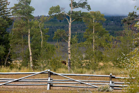 wood rail fence with light snow on Wyoming ranch
