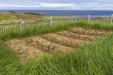 traditional raised bed garden by the sea, Elliston, Newfoundland 스톡 콘텐츠