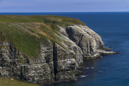 Cape St. Marys Ecological Reserve, Newfoundland