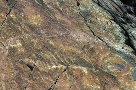 ancient fossils imprinted in rock at Mistaken Point Ecological Reserve, Newfoundland