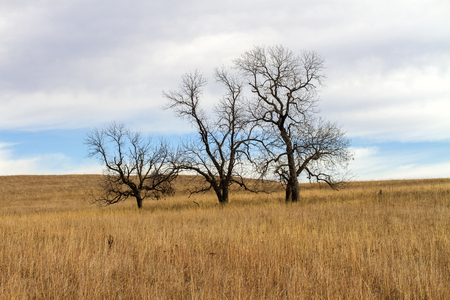 three bare trees on Kansas hillside with tall grass Standard-Bild