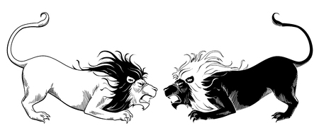 Lions fighting Illustration