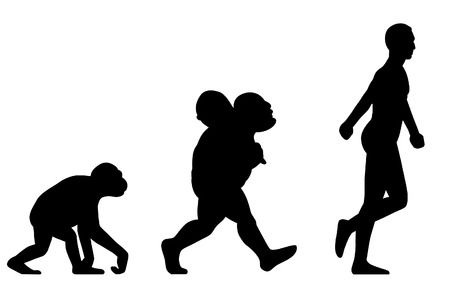 primate biology: Silhouette Human evolution
