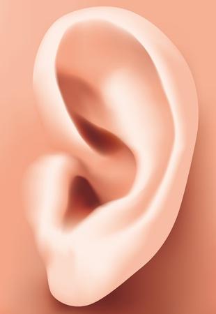 human ear: Ear closeup