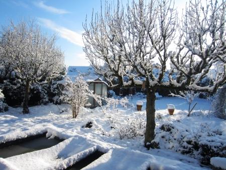 Snow Covered Garden Norfolk England  Фото со стока