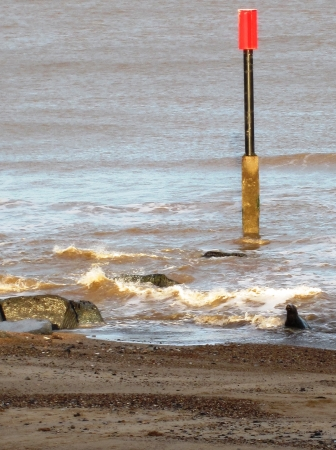 Seals On the Beach near Sea Palling Norfolk England photo