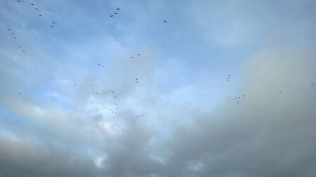 migrating: Looking up at Blue but cloudy Winter sky with flock of migrating birds