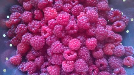 Raspberries freshly picked from the garden