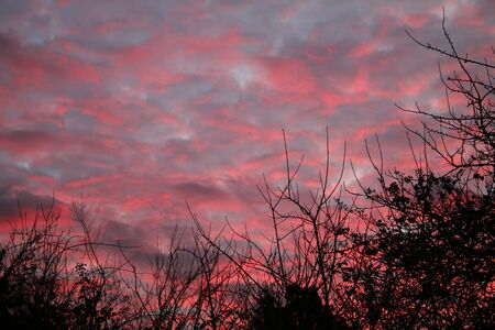 A pink and blue stunning sunset sky in Winter with silhouette tree branches in black Stock Photo