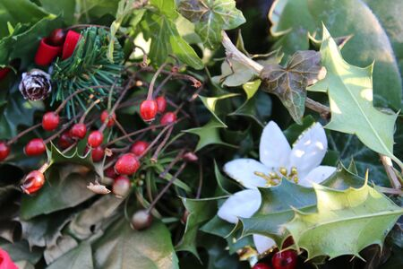 White flower and red berries amongst holly and evergreen leaves stock photo white flower and red berries amongst holly and evergreen leaves with reflected sunlight mightylinksfo