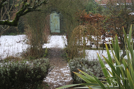 icey: A snow view along a garden path through a rose arch to a secret door at the back with plants trees and bushes in Spring