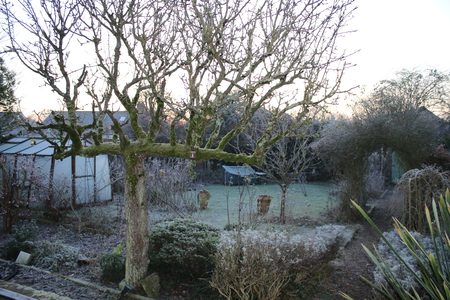 icey: A day of frost in the garden in England with a view with greenhouse and garden path which leads under the rose archway to a secret door beyond