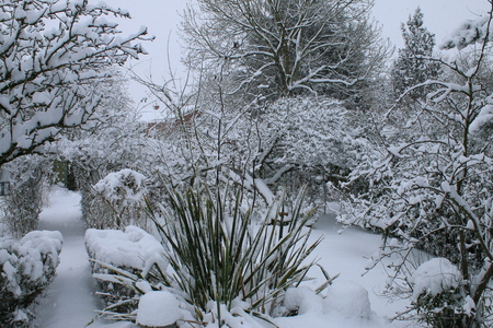 A Landscape Snow Scene Showing A Winter Garden Covered In Virgin Snow With  Patio, Plants